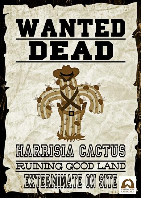 Cactus JackWantedSign